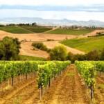 tuscany_vinyard